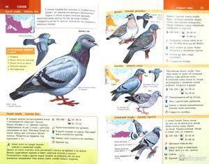 Nomadske ptice