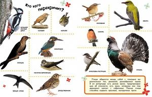 Katere ptice ne odletijo v toplo zemljo
