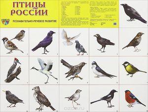 Ptice na ozemlju Rusije