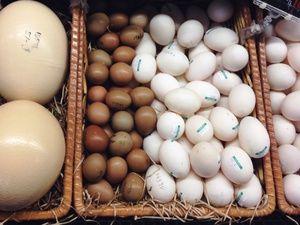 Koliko hraniti jajca