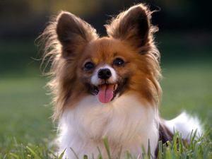 Krče pri psu vzroki in zdravljenje: prva pomoč