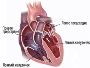 Srce sestavljajo atriji in ventili, ki opravljajo svoje funkcije