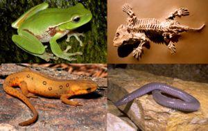Evolucija je vsaki vrsti naredila najučinkovitejšo strukturo