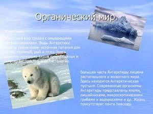 Edinstveni živalski svet na Antarktiki