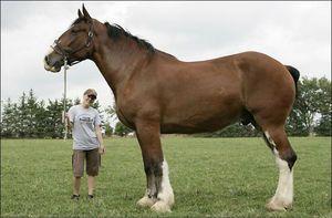 V velikem svetu so največji konji