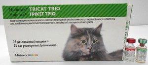 Cepivo Nobivac za mačke - navodila za uporabo