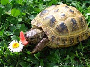 Opis želv