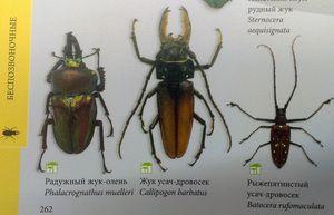 Vrste žuželk in njihova imena