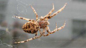 Zunanja struktura pajka. Posebne sposobnosti za preživetje
