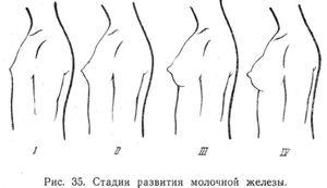 Razvoj prsi