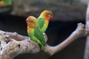Kaj vpliva na pričakovano življenjsko dobo papiga