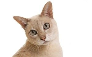 Starost mačke po človeških standardih