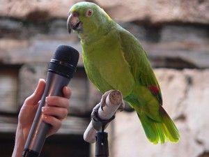 Sposobnost poučiti papagaja
