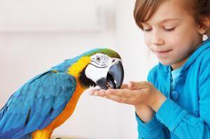Lepo ravnanje s papagaji