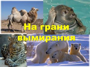 Ogrožene živali na ozemlju Rusije, ogrožene vrste rastlin
